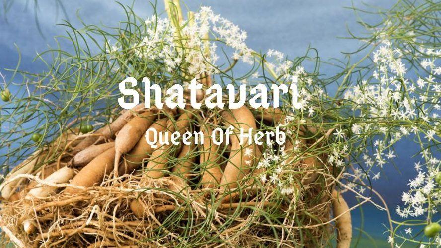 Shatavari: Queen of Herbs