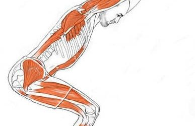 Alignment in Yoga Posture- for Optimal Performance of Muscles & Prevent Injury