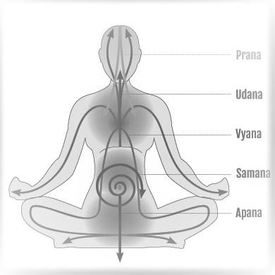pancha prana in human body- Pancha vayus