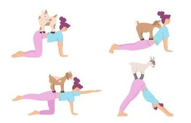 Goat Yoga- New Trend of Yoga